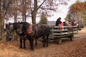 Wagon Rides at Clear Lake