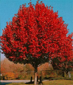 Balsam Hill Christmas Tree Coupon